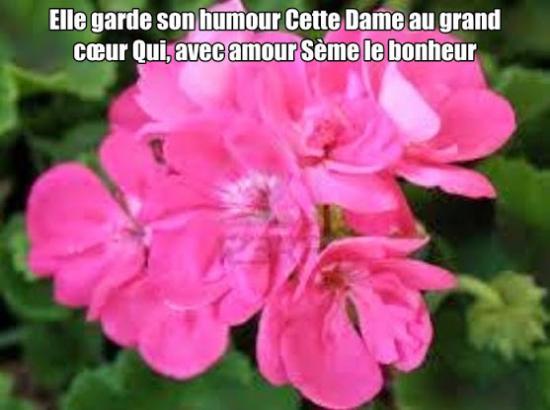 Ce geranium au grand coeur 1
