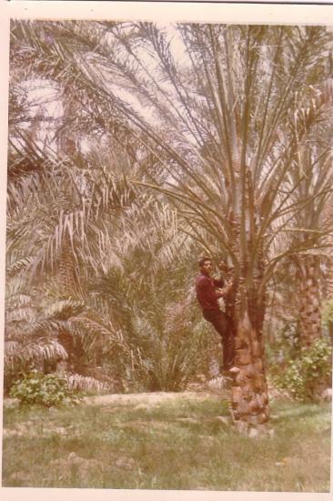 mon-palmier-a-moi-1.jpg